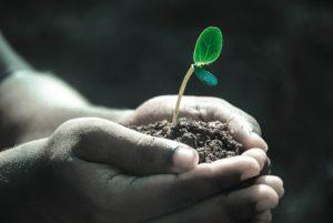 Sprouting nonprofits
