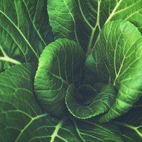 green leaves growing
