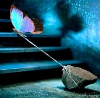 Unhealed Trauma (tethered butterfly)