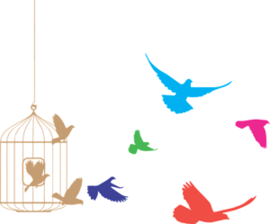 Birds fly out of cage