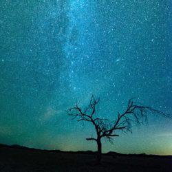 bare tree under starry sky