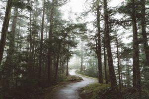 path winds away into a fog